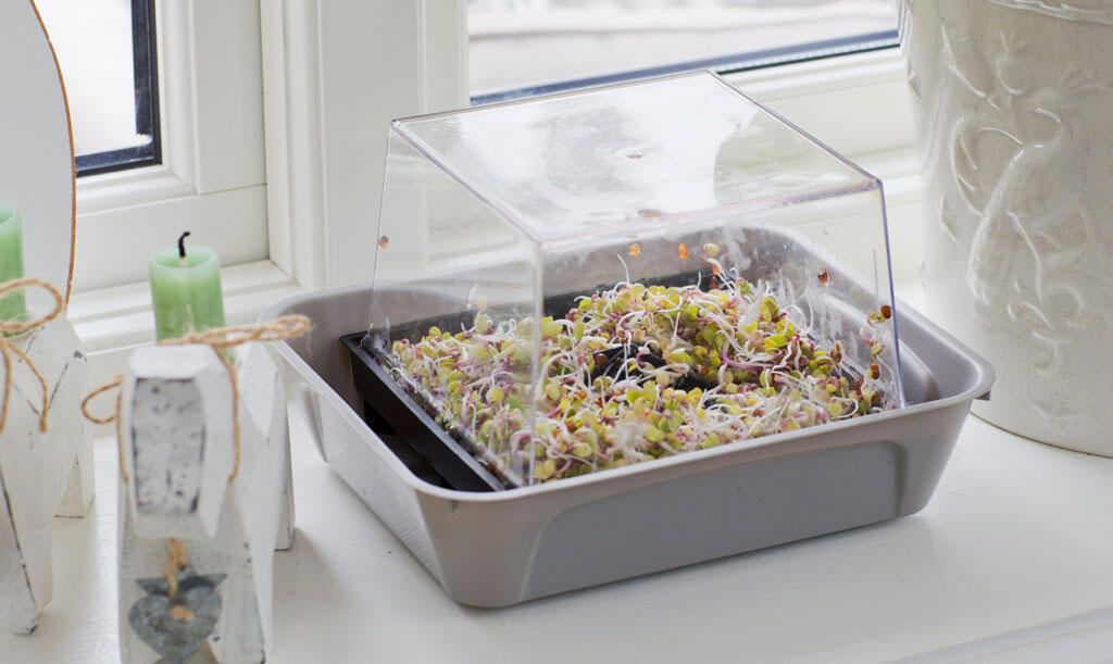 Sprouting-how-to-grow-sprouts-at-home-1.jpg